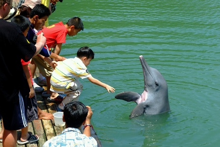 cetaceans: Asian boy playing with dolphin Stock Photo