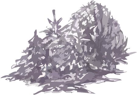 Winter forest landscape. Sketch of a beautiful forest landscape. Freezing day, spruce covered in snow