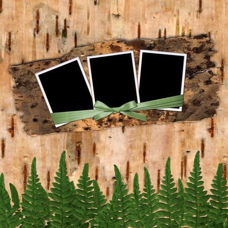 Three frame with ribbons and bow to birchen bark Stock Photo - 3960498