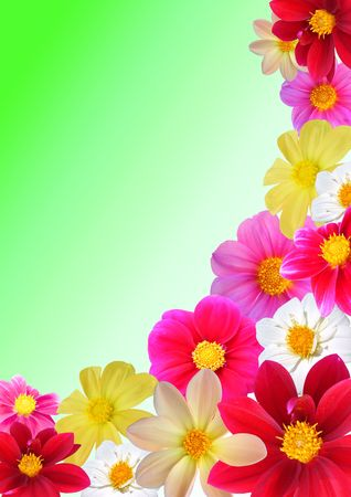 dearly: Flofal composition of different colours dahlia. Dearly green background, A3 Stock Photo