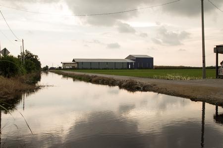 Waterway on a rice paddy field in Sekinchan Malaysia