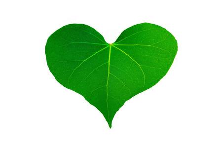 fash: Green leaf