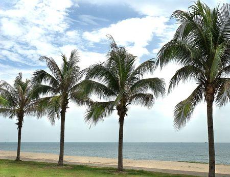 Beach, the wind.