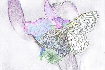 Butterfly and flower painting. Stock Photo