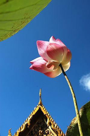 Lotus, Thai temples.