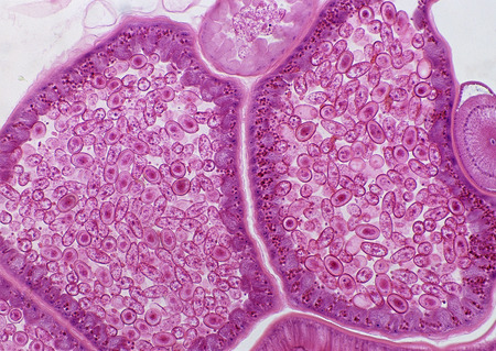 Cell Gene Microscopic Series Фото со стока