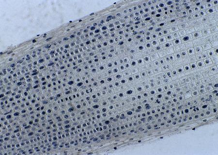Cell Gene Microscopic Series Archivio Fotografico