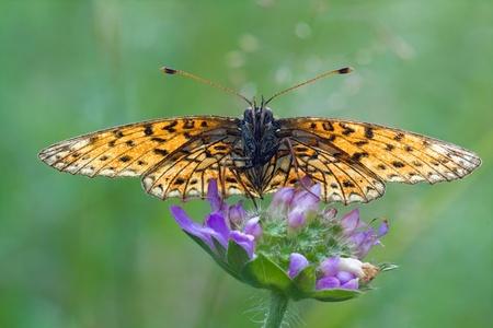 full face: butterfly sitting on flower full face Stock Photo