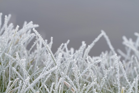 Crystals of rime on the grass. Stock Photo