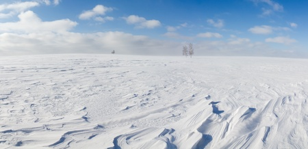 Winter panorama, desert terrain with ground driftsnow and a few birches.