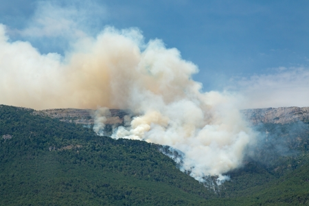 A fire in a mountain forest near Yalta  Crimea, Ukraine  photo