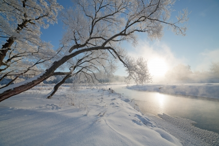 Winter landscape of tree on the edge of the river on a foggy  morning