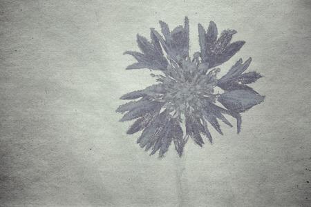 textured old paper grunge background with cornflower