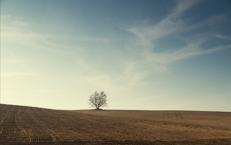 autumn landscape - lonely tree on the top of a hill with grassland arable.