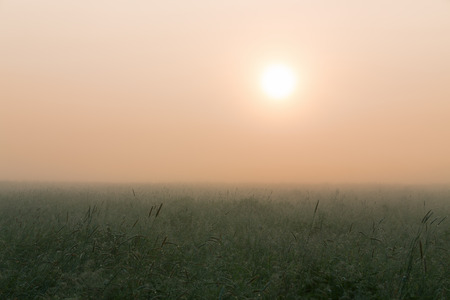 meadow  grass: meadow grass in the dew and fog against a rising sun Foto de archivo