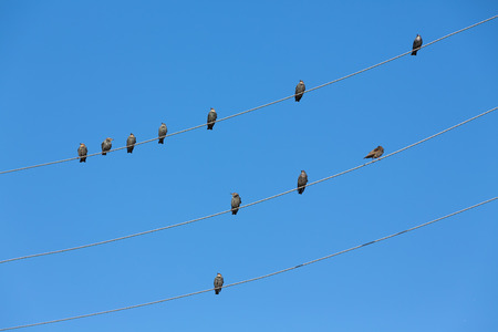 birds on a wire: Birds on Wire Stock Photo