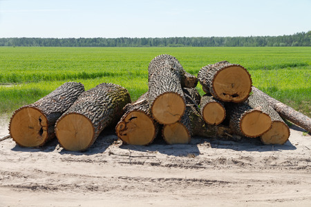 logs: logs sawn oak Stock Photo