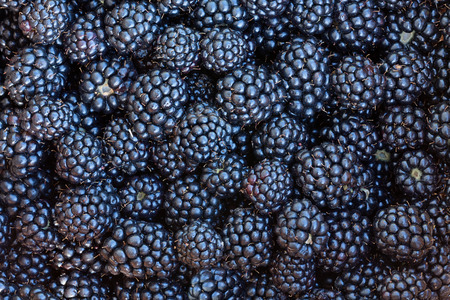 berries blackberries closeup Stock Photo
