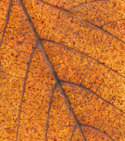 orange yellow maple leaf texture pattern, autumn fall copy space