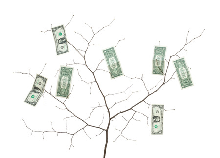paper money, dollar banknotes on a branch   Stock Photo