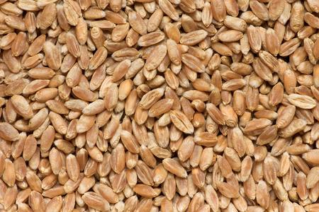 background of ripe wheaten grain