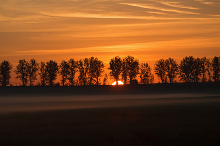 Silhouettes of a trees against a rising sun in the fog