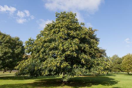 citrus tree: Citrus tree