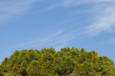 Treetop with blue sky
