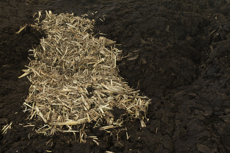manure: Cow manure with straw background Stock Photo