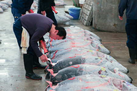 fishing industries: Famous Tuna auction at Tsukiji fish market. Tsukiji is the biggest fish market in the world