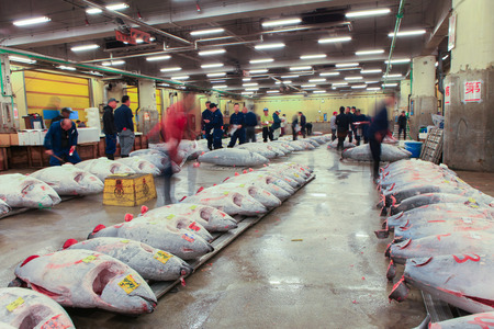 Famous Tuna auction at Tsukiji fish market. Tsukiji is the biggest fish market in the world