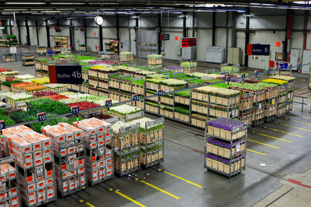 Auction floor at Aalsmeer floraholland largest flower auction the the world Banco de Imagens - 46708078