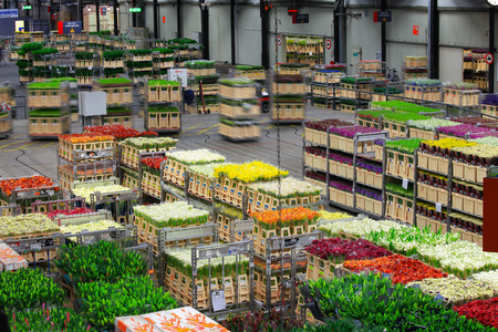 Auction floor at Aalsmeer floraholland largest flower auction the the world Banco de Imagens - 46708089