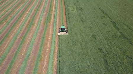 Combine harvester in a green field - Aerial image
