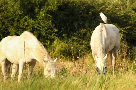 dualism: Bird on a white horse