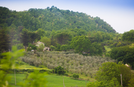Beautiful view on mediterranean vineyard on hill photo