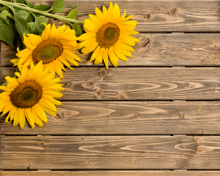 Three sunflowers are on the wooden background. These flowers are represented at left top corner. The space may be used for your ideas.