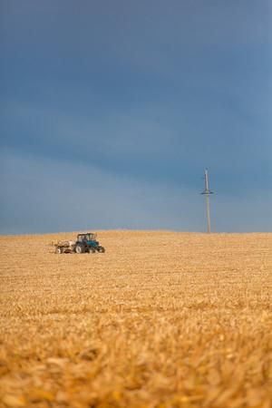 harvest: Combine harvester harvesting corn in the distance. Combine harvester working on corn field in autumn season.