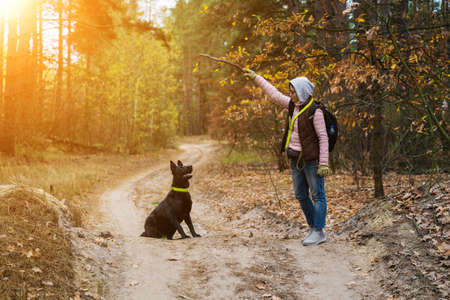 A Woman In Casual Training While Hiking On A Forest Road On A Warm Autumn Day. Black Purebred Shepherd Dog Sitting Fulfilling The Command Of The Hostess