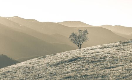 Aerial mountain landscape with a single tree growing on a grassy slope of mountain, Beautiful nature of mountains with clean environment, Coloring in sepia tone. Фото со стока