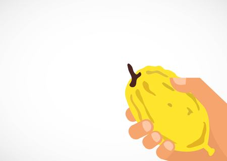 Hand holding a citron, Etrog in Hebrew. Religious Jews chooses ritual plant