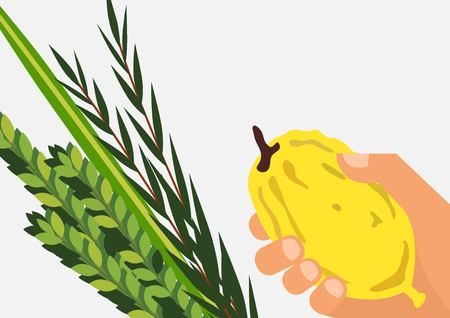 Jewish holiday Sukkot. torah with Lulav, ,Etrog, Arava and Hadas. Four species symbols date palm, citron, willow, myrtle vector illustration Illustration