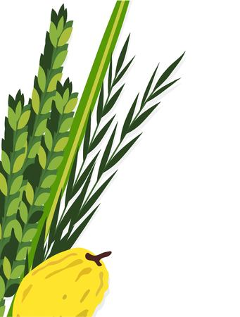 judaica: Jewish holiday Sukkot. torah with Lulav, ,Etrog, Arava and Hadas. Four species symbols date palm, citron, willow, myrtle vector illustration Illustration