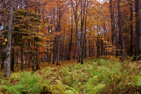 Autumnal forest with ferns photo