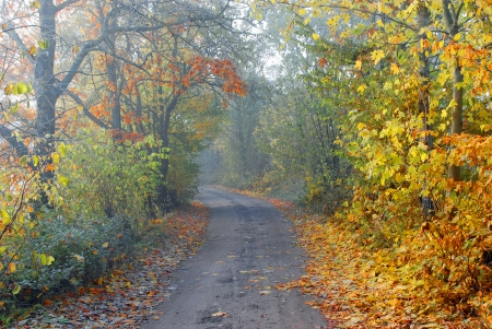 road autumnal: The foggy autumnal country road