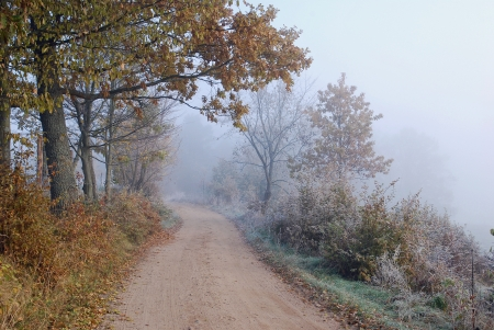 vanishing: The foggy road can symbolise vanishing  The moment between autumn and winter, older age and death