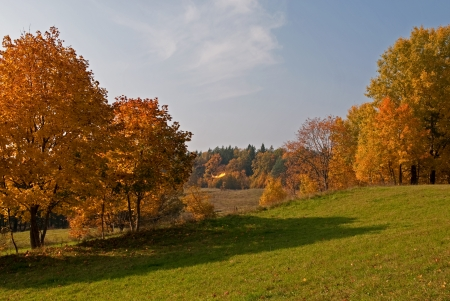 Autumn lanscape with golden trees photo
