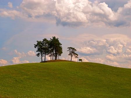 masuria: Pine trees on the hill in Masuria