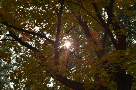 thick: Light rays shining through the thick layer of tree leaves