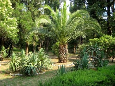 subtropical: subtropical plants Stock Photo